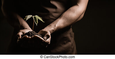 Hands holdings a little green plant, studio shoot