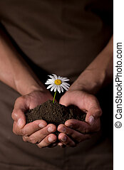 Hands holdings a little flower plant - Hands holdings a...