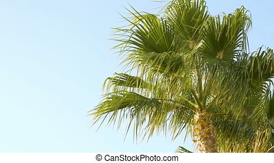 Palm trees are moving in the wind Summer time climate makes...