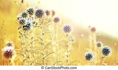 Close view on landscape with beautiful flowers in field on sunrise background.