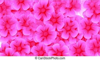 pink wild flower flow background