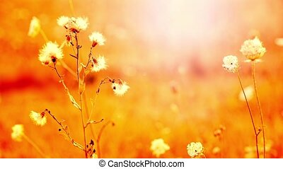 Beautiful flowers in field on sunset background Sunny...