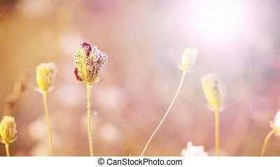 Beautiful flowers in field on sunset background. Sunny outdoor bright evening.