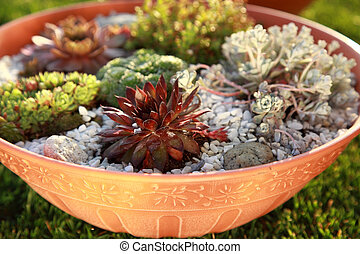 Small rock garden - Beautiful rock garden cultivated in...