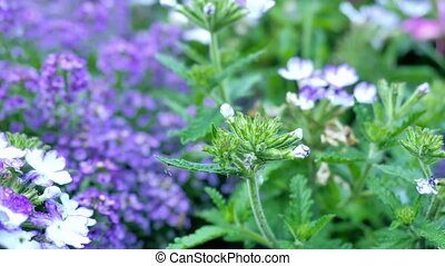 A variety of purple wildflowers motion video makes it...