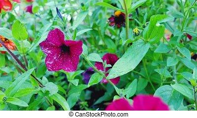Purple flower bell.