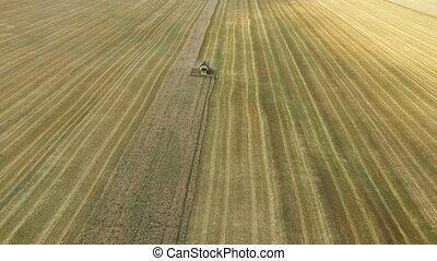 Combine harvester gathers the grain