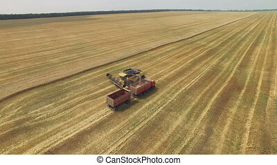 Combine harvester gathers the grain. The flight over a field...