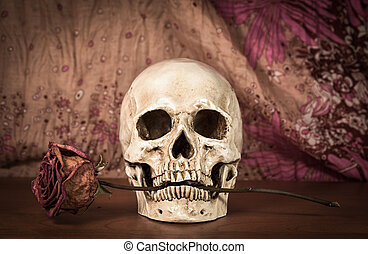 Still life white human skull with dry red rose in teeth on...