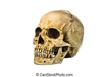 Side view of human skull - Front view of human skull on...