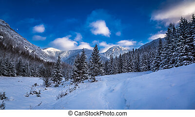 Winter in the Tatras