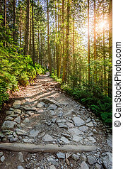 Mountain path in the forest at sunrise