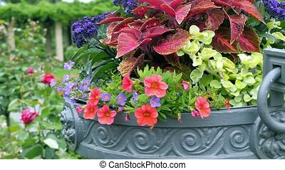 Many different colors in a large outdoor pots Camera...