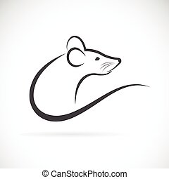 Vector of rat design - Vector of rat design on white...