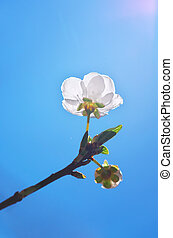 Spring bud on sky. - Spring bud flower. Composition of...