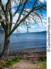 Nature of Loch Ness in Scotland.