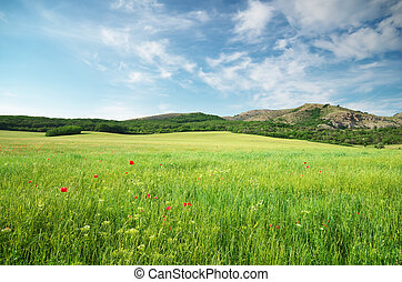 Green spring meadow in mountain Composition of nature