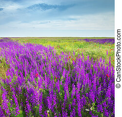 Spring meadow of violet flowers. Nature composition.
