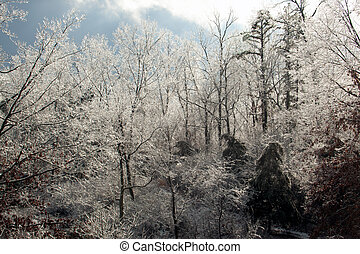 Ice Covered Trees - Ice covered trees with a blue sky...