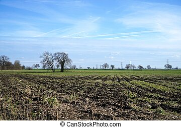 Winter Field, Cambridgeshire - A flat, rutted, empty field...