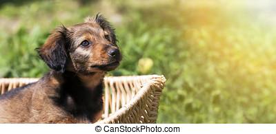 Happy puppy banner