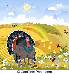 lovely turkey in autumn sunny day. happy thanksgiving. rural sce
