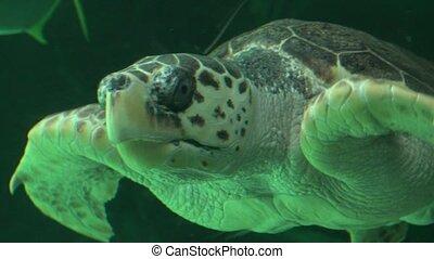 Sea Turtle Swimming In Aquarium