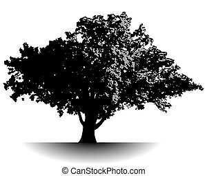 Spectacular ancient tree in black and gray