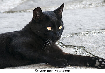 Black cat closeup - Young black cat lying on stone pavement...