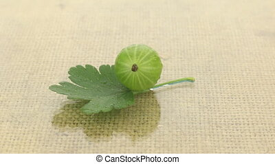 Rotation of green gooseberry in drops of dew on a background...