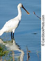 Bird fishing in a lake