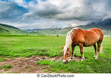 Horses in mountain valley, Umbria, Italy