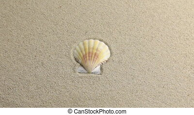Approximation seashell lying on the sand with space for your...