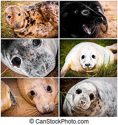 collage, foto, imágenes, bebé, sellos