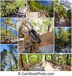 Photo collage of Samaria Gorge images in central Crete, Greece