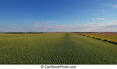 Aerial flight over corn field with blue sky
