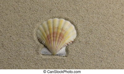 Removing seashell lying on the sand with space for your...