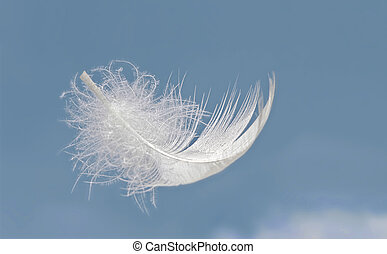 Light as a feather - Fluffy feather floats in front of...