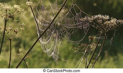 Spider web shaking on wind in forest HD