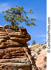 Stunted Tree on a Rocky Outcrop
