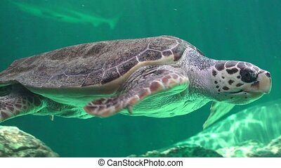 Sea Turtle And Other Marine Animals