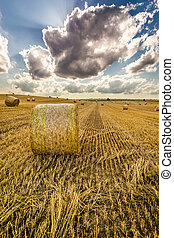 Golden sheaf of hay at summer
