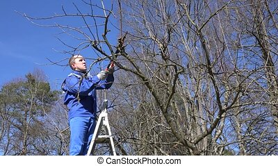 man pruning tree standing on ladders. Static shot.