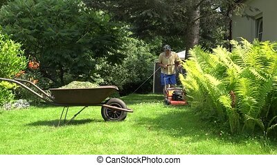 man shake grass out from trimmer in old rural wheelbarrow....