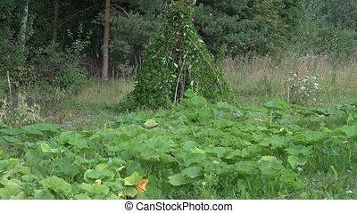 Garden plants and harvested fresh vegetables in grass. Tilt...