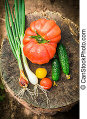 Homemade vegetables in garden