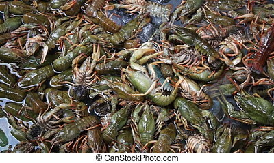 Crayfish in the Fish Market - A lot of fresh live crayfish...