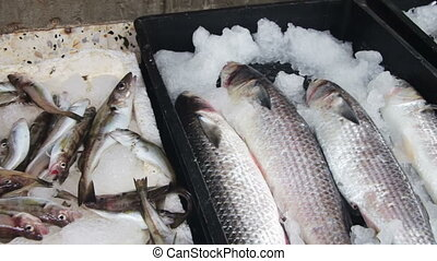 Fish Market - Fish market. Fresh sea fish in ice on the...