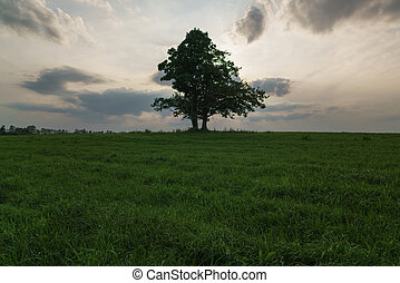 oak and maple grow together on green field in sunset