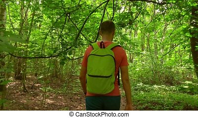 Man with green backpack hiking in summer sunny forest. 4K steadicam shot